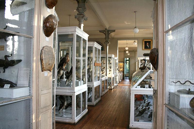 Le Muséum d'Histoire Naturelle de Bordeaux