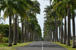 Vacances en Guadeloupe : les musées à visiter